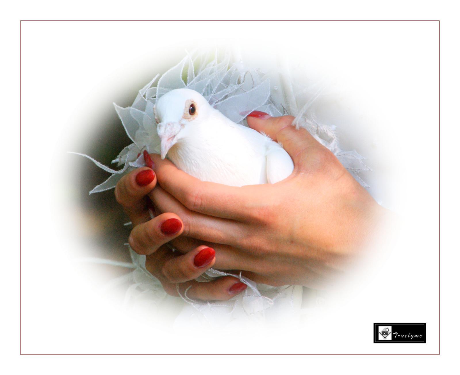 duivenfotos-05.jpg.jpg