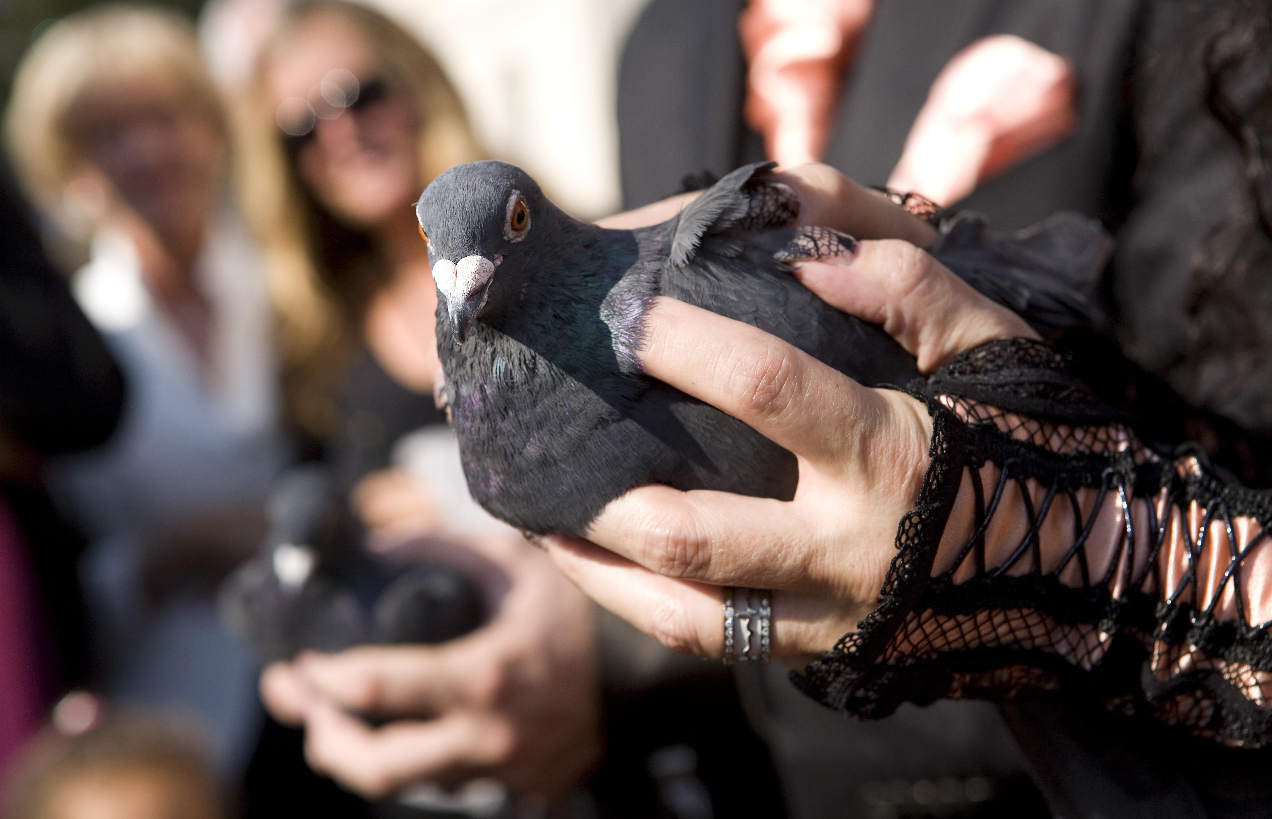 duivenfotos-25.JPG