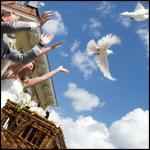 17-witte-duiven.jpg